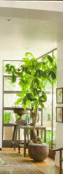 indoor tree - bring the garden indoors during the long winters...