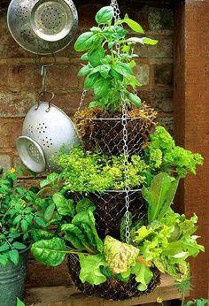 Hanging Trellis Herb #Garden