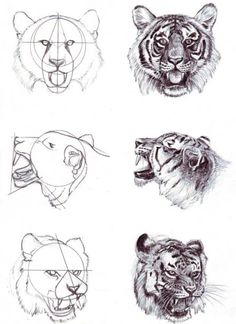 tiger head how to draw