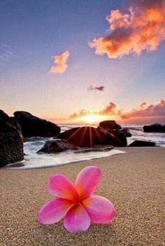 Plumeria by the Sea Beach Wallpaper, Nature Wallpaper, Wallpaper Backgrounds, Hawaii Pictures, Sunset Pictures, Walpapper Tumblr, Plumeria Flowers, Pretty Wallpapers, Beautiful Beaches