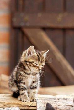 Tired little kitty. via @EmrgencyKittens