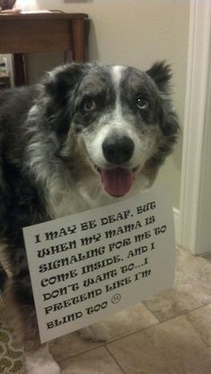 My deaf dog does this also! How funny!