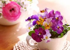 昨日の花摘み後、ティーカップにビオラの盛り合わせ。2015.12.29 #gardening #flowers #viola #violet #pink #ガーデニング #ビオラ #花のある暮らし  #園芸部 #花部 #花摘み