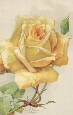 Light yellow rose by Catherine Klein more yellow roses… Catherine Klein, Illustration Botanique, Botanical Illustration, Watercolor Flowers, Watercolor Art, Rose Art, Arte Floral, Flower Pictures, Vintage Flowers