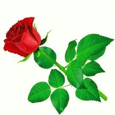 Rose 11 Model available on Turbo Squid, the world's leading provider of digital models for visualization, films, television, and games. Beautiful Rose Flowers, Flowers For You, Single Red Rose, 3d Rose, Rose Stem, Good Morning Flowers, Like Animals, Flowers Online, Flower Designs