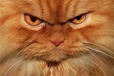 Garfi, o Gato mais zangado do Mundo