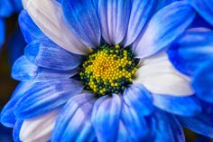 Świeże kwiaty - to jest to co kochamy