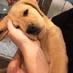 """Please don't leave me alone."" #cute #dogs #dog #aww #puppy #adorable"
