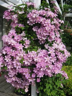 climbing flowers - Bing Imágenes