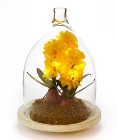 Yellow Hyacinth LED Bell Jar Arrangement   zulily