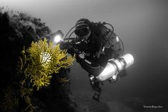 https://flic.kr/p/ssoXdx | underwater photography | Photo by Yiannis Iliopoulos