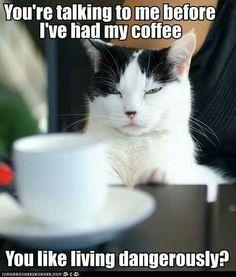 You Like Living Dangerously?