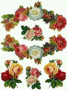 Rosa y mas rosas