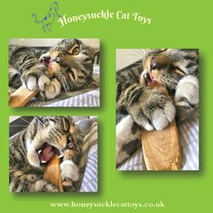 I love these photos of my gorgeous cat customer Worm playing with his slice of honeysuckle wood... 😺  #CatHeaven #AwardWinning #HoneysuckleCatToys #ShopSmall #CatToys