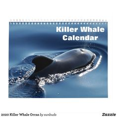 Shop 2020 Killer Whale Orcas Calendar created by sunbuds. Baby Dolphins, Rare Animals, Strange Animals, Pet Rats, Pets, Whitetail Bucks, Humpback Whale, Killer Whales, Boat Plans