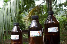 PREPARANDO TINTURAS MADRES DE LAS PLANTAS MEDICINALES  Usoy preparo tinturas madres, que son más potentes que las infu...