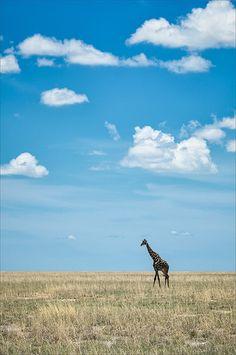 Strollin' Giraffe