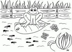 Kikker, kikkerdril en kikkervisjes