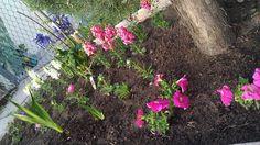 Petunias , glads and delphinium.