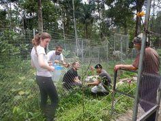Volunteer with monkeys in Ecuador at an inspiring rescue centre Gap Year, Primates, Monkeys, Ecuador, How To Become, Wildlife, Couple Photos, Beautiful, Couple Shots