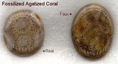 comparing real fossilized agatized coral with the faux
