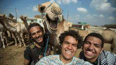 Selfie met lachende kameel