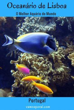 Que tal visitar o melhor aquário do mundo? Ele está localizado na cidade de Lisboa em Portugal. O Oceanário de Lisboa deve estar no seu roteiro.