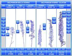 Associated Cut Flower Co., Inc. Floral Product Gallery - Delphinium