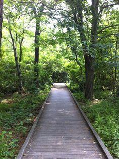 Maritime Forest Hiking Trail, Corolla, NC