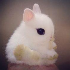 Buenos días! Les mandamos un cariñoso saludo como cariñoso es este pequeñín!  REPOST<> @awesome.pix  Follow @BabyAnmls for cute pics of animals! The best on Instagram!  ___________________________  FOLLOW THEM!  @BabyAnmls @BabyAnmls @BabyAnmls #placeok #travelblog #cute #animal #rabbit #bunny