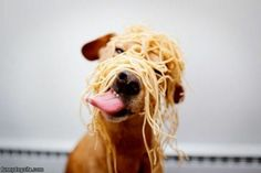 Pasghetti dawg