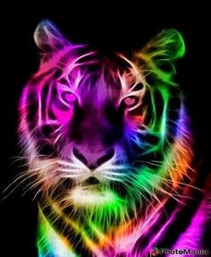 A Colorful Tiger Illustration