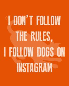 I don't follow the rules, I follow dogs on Instagram 💁♀️🐶 #WeeklyPLAYQuote #dogquotes #dogmoments #dogsarethebest #dogloversfeed #dogslife #dailydogs #wedontdeservedogs #dogsarebetterthanhumans #dogsareloves #dogsarethebest #dogsmakeeverythingbetter #dogmeme #introvert #caninetrovert #dogsayings #dogjokes #dogmomaf #mood Cute Cat Quotes, Dog Quotes Funny, Funny Dogs, Play Quotes, Dog Jokes, Animal Quotes, Introvert, Dog Mom, Mood