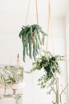 Gorgeous Greenery Indoor Hanging Plants Display