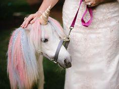Every wedding needs a unicorn petting zoo. Jessica Maida Photography #unicorn #wedding
