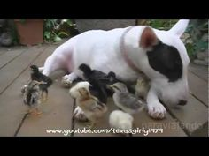 Amazing relationships between Animals, shock! - YouTube