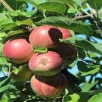 4-Acre Permaculture Orchard Flourishes Without Using Fertilizer for 6 Years