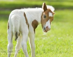 #pony #horse #foal #colt #summer #spring