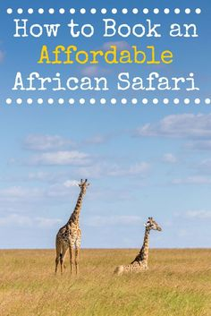 All the things you can do to save money when booking a safari in Africa. : All the things you can do to save money when booking a safari in Africa. Kenya, Travel With Kids, Family Travel, Sri Lanka Reisen, African Safari, East Africa, Africa Travel, Traveling By Yourself, Travel Inspiration