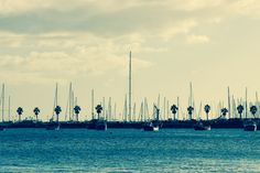 com - Blue Water Ocean Sailboats Palm Trees Clouds - Public Domain Images Thomas Merton Quotes, Elizabeth Taylor Quotes, Leo Buscaglia Quotes, Les Brown Quotes, Emily Dickinson Quotes, Jim Rohn Quotes, Stone Quotes, Madeira Beach, Lisa