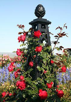 Rose Pillar Malmaison Garden Obelisks Www Clic Elements Co Uk Arches Arbours Trellises And Planters