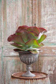 The Unexpected Houseplant via Pottery Barn. I especially like Kalanchoe thyrsiflora ./ dans un autre pot, blanc carré.