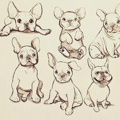 """Explore our site for additional relevant information on """"French bulldog pups"""". It is actually a great location for more information. Cute Dog Drawing, French Bulldog Drawing, French Bulldog Tattoo, Cute French Bulldog, Cute Animal Drawings, Cute Drawings, Drawing Sketches, French Bulldogs, French Bulldog Full Grown"""