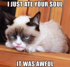 grumpy cat | Grumpy Cat memes