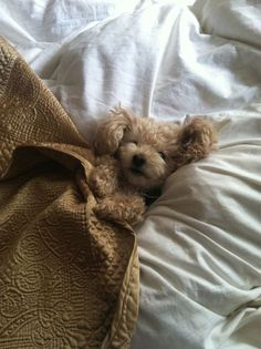 sweet puppy with pretty brown quilted blanket