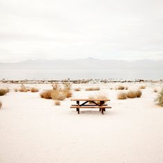 Picnic at Salton Sea by Pinecone Camp (Janis Nicolay)