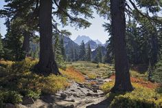 Willamette National Forest and Pacific Crest Trail