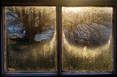 countryside, frost, sheep, tree, window