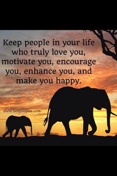 79 Best Elephant Quotes Images Thinking About You Quotes