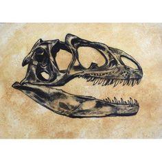 Allosaurus dinosaur skull Canvas Art - Harm PlatStocktrek Images (17 x 12)
